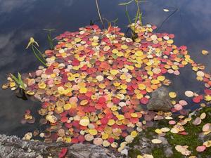 I Kolbäcksåns vatten visade naturen upp hela höstens färgskala. Vackert tycker jag som gillar vackra färger.