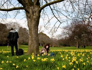 Snart blir det läge att slå sig ner en stund bland vårblommorna i parken.