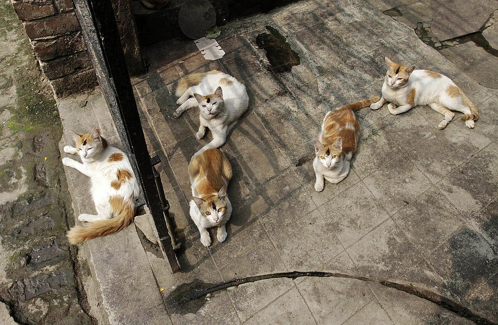 45 vanvardade katter omhandertogs