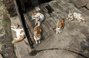 OBS: Katterna på bilden har inget med texten att göra