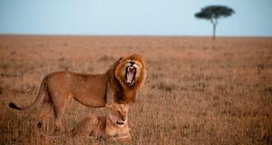 Upplev Kenyas natur i landets nationalparker.
