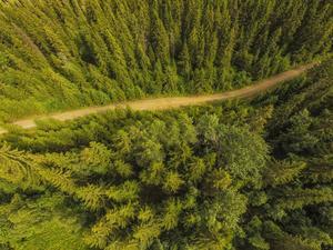 Är det kanske så illa att man inte ens har kompetens att identifiera de prioriterade skogstyperna, som kalkbarrskog, ute i fält, undrar debattörerna.