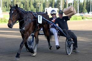 Ola M Skrugstad har haft många fina kallblodsston. I år kan Lannem Silje ge honom en fin titel – segern i Svenskt kallblodsderby.