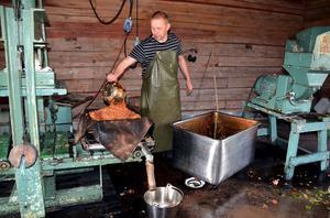 Mats Rönnelid har öppet på Myggs musteri även i år. Där finns också pomologen Olle Ridelius på plats för att hjälpa till med sortbestämning av äpplena.