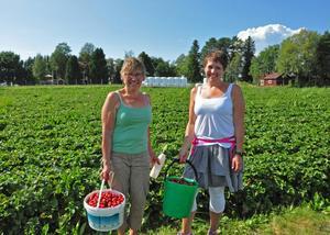 Helvi och Monica Niemi är från Östersund och det var deras första besök på självplocket på Rödöns jordgubbsland.   – Det gick fort att fylla hinkarna, säger Monica Niemi.