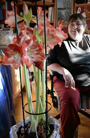 En stor blomma. Gunilla Lindström Eriksson och hennes senaste amaryllis. bild: ANDERS ALMGREN
