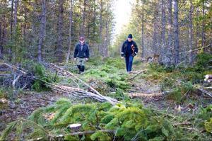 Peter Persson och Sven-Göran Persson var mer och planterade den här skogen för 34 år sedan. Nu har de i uppgift att gallra den.