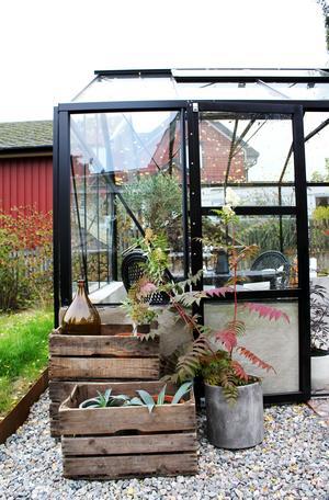 Pernilla Jansson på Skiljebo visar sitt växthusPlanen är att även ha odlingar utanför växthuset.