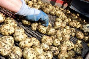 Potatis från Rödön blev ett vinnande koncept i årets republikrätt.