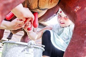 Maja Pernu testar att mjölka en leksaksko.