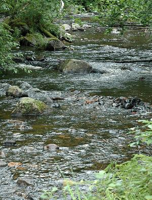 Stenblocken är viktiga för att skapa en bra miljö för småfisken att leva i.