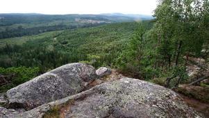 Tansvägga naturreservat är ett naturreservat i södra Dalarna, i Gagnefs kommun. Den högsta punkten är den 400 meter höga så kallade Predikstolen varifrån man har en vidsträckt utsikt. Naturen anses vara värdefull och nästan orörd.
