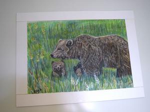 När björnarna i Siljansnäs inte ville visa sig åkte Ehab Hameed till Orsa björnpark.