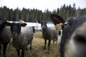 Djurskyddskontrollen i Borlänge gick felfritt.