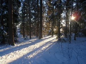 En fin Decemberdag i Bjurhovdaskogen