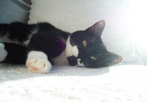 """Katten jansson är kärlekfull och tacksam.""""Det här är vår katt, Katten Jansson. Han och hans sju syskon föddesnågongång under sommaren av en vildkatthona i en lagård i närheten av där vi bor. När vi upptäckte katterna var de helt förvildade och väldigt skygga – alla utom Jansson. Han visade sig vara en fantastisk självständig och social individ sominte brydde sig om att vara rädd. Nu har han bott hos oss sedan september ochvi har fullständigt kapitulerat för hans charm.  Jansson är enotroligt kärleksfull och tacksam liten katt som det kunde gått precis hur som helst för. Vi är väldigt glada att vi fann honom, att han fann oss."""" Foto:‑Linda Nilsson, Hammarstrand"""