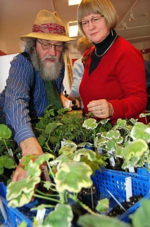 Et fint exemplar. trädgårdsmästare Mats Asplund visar Lena Trägårdh fina pelargonsorter.