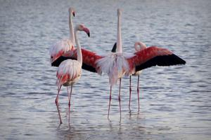 Flamingor trivs i de forna saltbassängerna.   Foto: Julien Mauceri