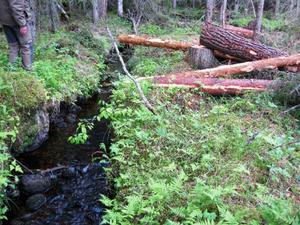 Man får inte avverka ända ned till vattnet, inte heller fälla naturvärdesträd. Därför är ortsbor och Naturskyddsföreningen mycket upprörda över SCA:s avverkning i Norrby.