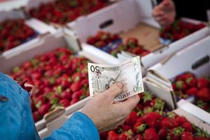 Jordgubbsförsäljare som arbetar för en oskälig lön och med dåliga villkor är ett nationellt problem, enligt Daniel Carlstedt från Handels.