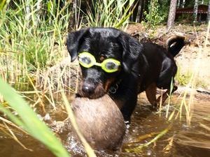 Kellys nya simglasögon ! Nu är det bara att dyka....
