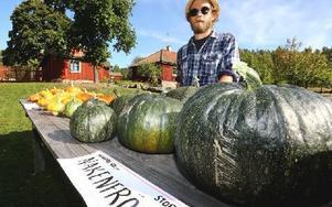 Niklas Bergström intygar att pumpor kan bli riktigt stora och tunga. Foto: Johnny Fredborg
