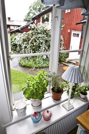 Blomster. Utsikten från köksfönstret bjuder på en blommande schersmin.