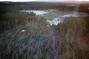 Bilden tagen från helikopter, i närheten av Bräcke, på fredagen efter stormen Ivar.