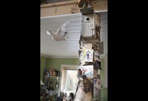 Björken i köket var den första som togs ner från tomten innan de började bygga sitt hus. Även fågelholken satt på ett träd i trädgården.