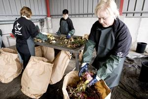 Mirja Törnquist, Marita Söderström och Marie Wiklund har vanligtvis andra arbetsuppgifter på Gästrike Återvinnare men har ägnat de två senaste dagarna åt att kontrollera hur bra Gävleborna är på att sortera sopor.