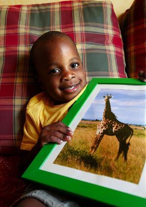 Ambros gillar giraffer. Han har en giraff på tröjan och en giraff på tavlan han fick i treårspresent, men några giraffer i de svenska skogarna har han inte sett - än.
