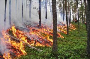 Naturvårdsbränning i Tunvågen, Bergs kommun, på ett skifte där arter ska återskapas.