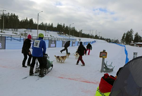 Vinterns VM för polarhundar kräver investeringar vid skidstadion.