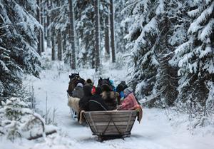 På väg in i vinterskogen med häst och släde.