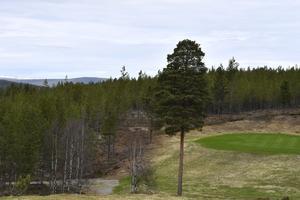 Grönt för golf i Idre, här hål 14.