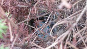 Dessa ägg hade en fågel lagt i våran lilla buske vid stugan, de är blåa till färgen kanske är det blåmes ägg :)