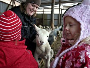 Gosigt. Barnen får klappa lamm hos Anna-Karin Bennberg på Liljeholmens bondgård.