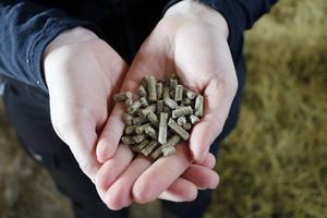 Kraftfodret ges i form av pellets.