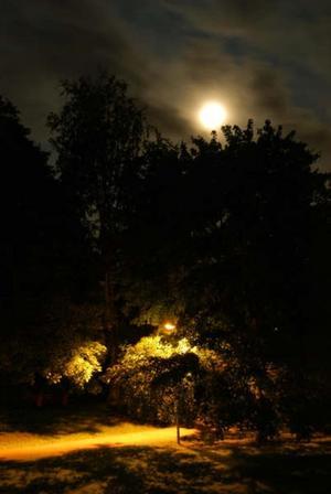 En gatlykta kämpar förgäves mot en övermäktig måne i den här novembilden, som känns riktigt hoppfull.
