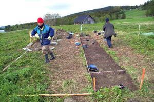 Arkeolog Anna-Lena Forsåker från Duved (i röd mössa) leder utgrävningsprojektet tillsammans med kollegan från Dvärsätt, Gunilla Lundqvist. Redan har man börjat nå botten i den första utgrävningsbädden, här förbereder man en ny. Tanken är att försöka lägga den så att man hamnar precis där ett hus stod.