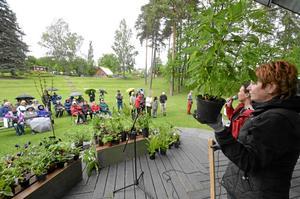 Auktion. Ulla Fogelström och Karina Magnusson höll i trådarna när Kumla trädgårdsamatörer höll auktion vid Kumlasjön. Här går en ananassalvia under klubban. Bild: JAN WIJK