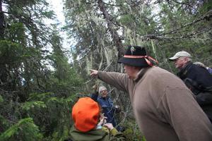 För ett otränat öga kan långskägget vara svårt att upptäcka i träden.