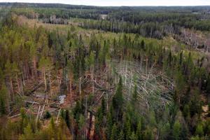 Stormfälld skog måste ut ur skogen senast den 15 juli. För den markägare som inte klarar av det väntar dryga böter motsvarande virkesvärdet.