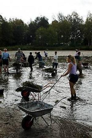 Foto: LASSE HALVARSSONJättejobb. Trots massiv uppslutning hann från frivilliga hann man bara röja en liten del av Lillsjön från vattenväxter.