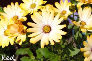 Ett par blommor en varm sommar dag