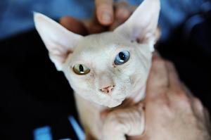 David Bowie har ett blått och ett grönt öga.