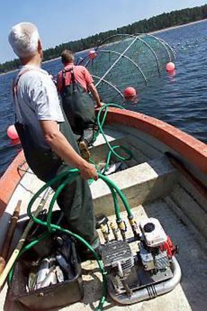 ARKIVBILD Sälsäkra laxfällor. Med de nya laxfällorna kan fiskarna minska skador på redskap och fångst orsakade av sälar.