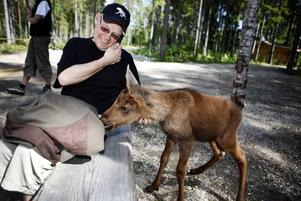 Lars Arkesjö i älgparken i Ockelbo gjorde fel när han tog hand om en övergiven älgkalv utan att först söka tillstånd. Den tre veckor gamla kalven ska avlivas.