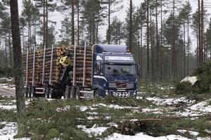 Ungefär 12 ton mer kan en 74 tons bil lasta jämfört med dagens timmerbilar. Det minskar både utsläpp och kostnader, menar Skogforsk.