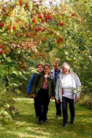 Till helgens sammmankomst, på Hamra konferens- och vildmarkscenter, kom deltagare från hela finnbygdsområdet – däribland Maud Wedin, Eva Jernqvist, Maths Östberg och Zinita Ritzen.
